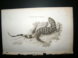 Shaw C1810 Antique Print. Variegated Lizard